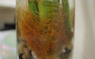Repotting Pothos Plant