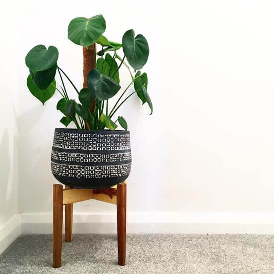 Different Types Of Monstera Plants
