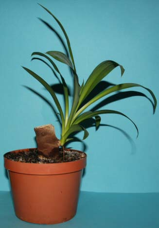 How to Propagate House plants | Our House Plants