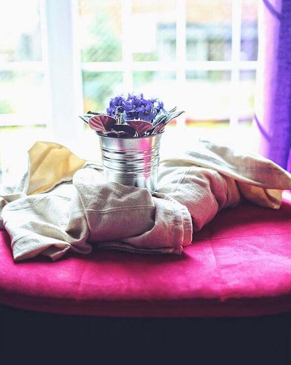 African Violet Saintpaulia Guide Our House Plants