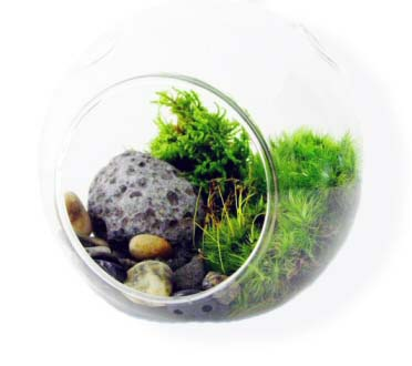 House Plants Can Be Grown In A Terrarium Bottle Garden Or Wardian Case