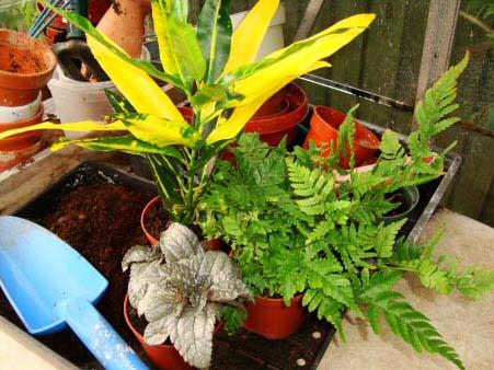 What are some popular terrarium plants?