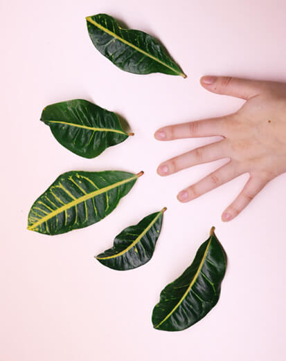 Croton leaves falling off is a very common problem for indoor plants