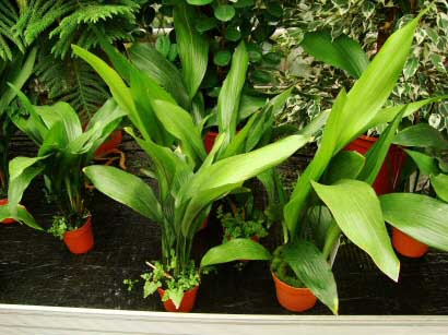 Garden Centres often have a large selection and range of house plants to buy from