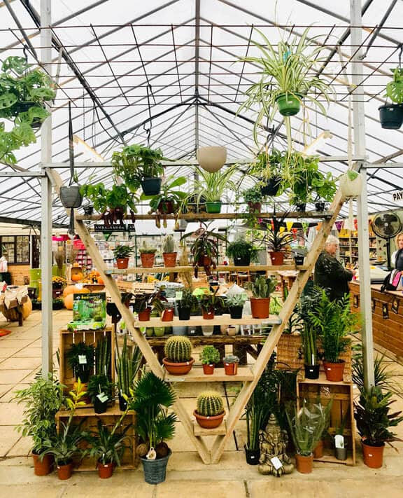 Garden Centres often have a large selection and range of houseplants to pick and buy from