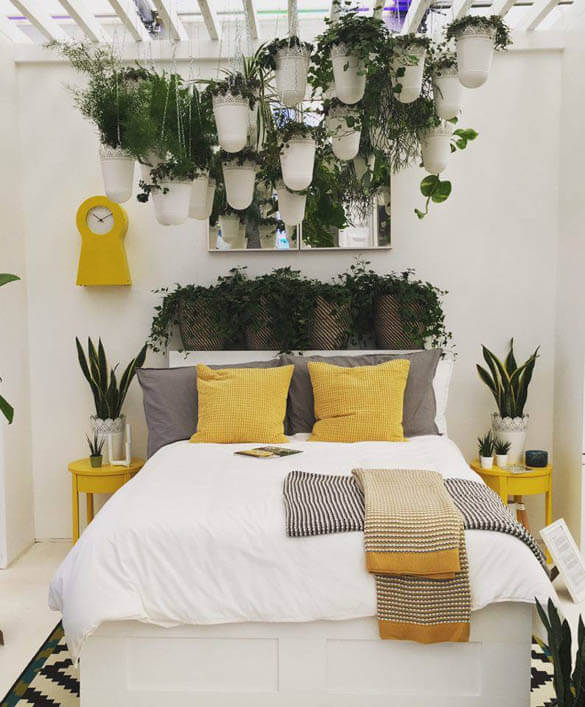 why house plants are good for your health  our house plants