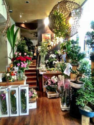 This shop is packed with wonderful house plants