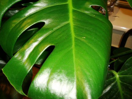 How To Clean Your Houseplants Our House Plants