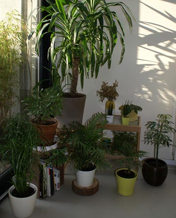 Watering House Plants Guide Our House Plants