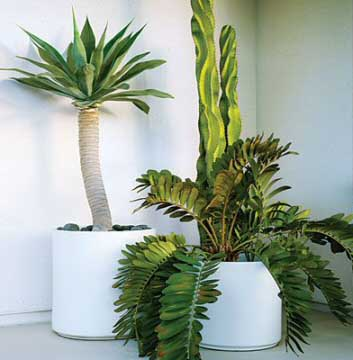 You may not find very modern house plants on Dr Wolverton's list