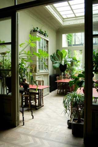 house plants are really good for you