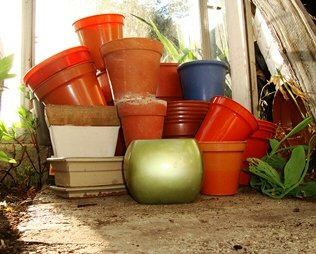 Repotting House Plants Guide Our House Plants