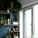 >Why Houseplants are good for health