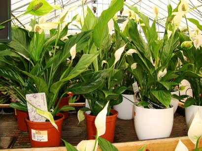 You can buy House Plants from a superstore and they can often be brought at cheap prices