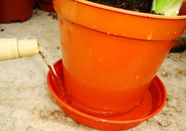 Overwatering a plant is the number one cause of indoor plant death