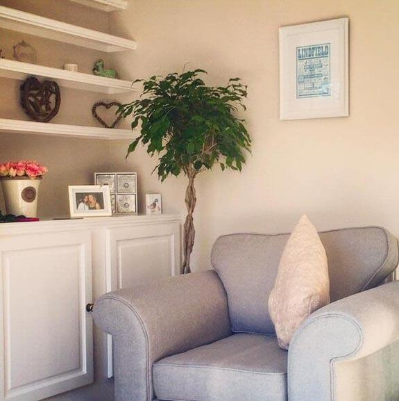 A happy mature tree-like Ficus growing in a home