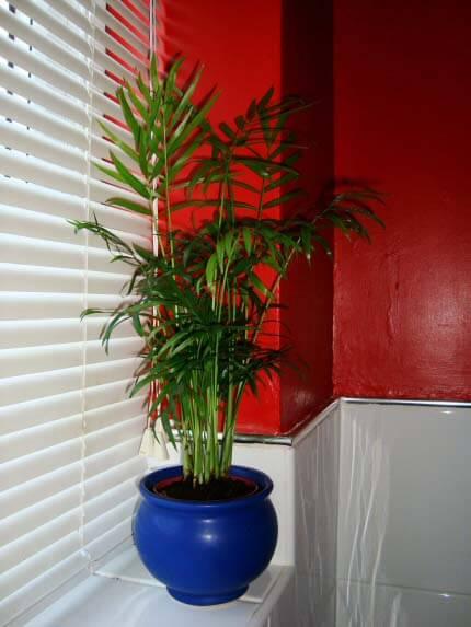 Deep Shade Plants