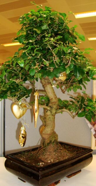 bonsai tree with hanging christmas decorations