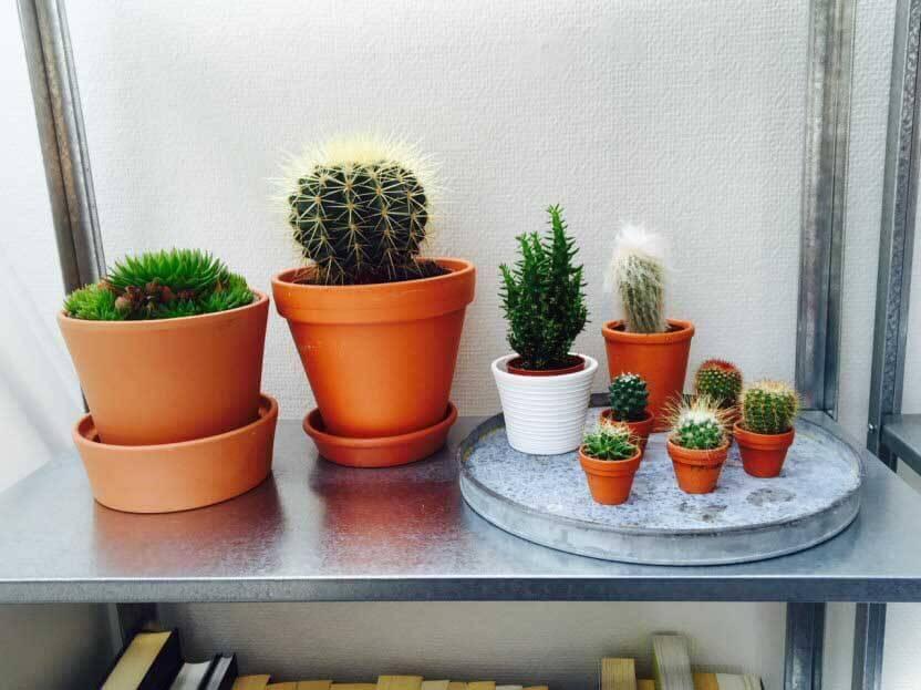 Group Of Cacti By Banana Kid