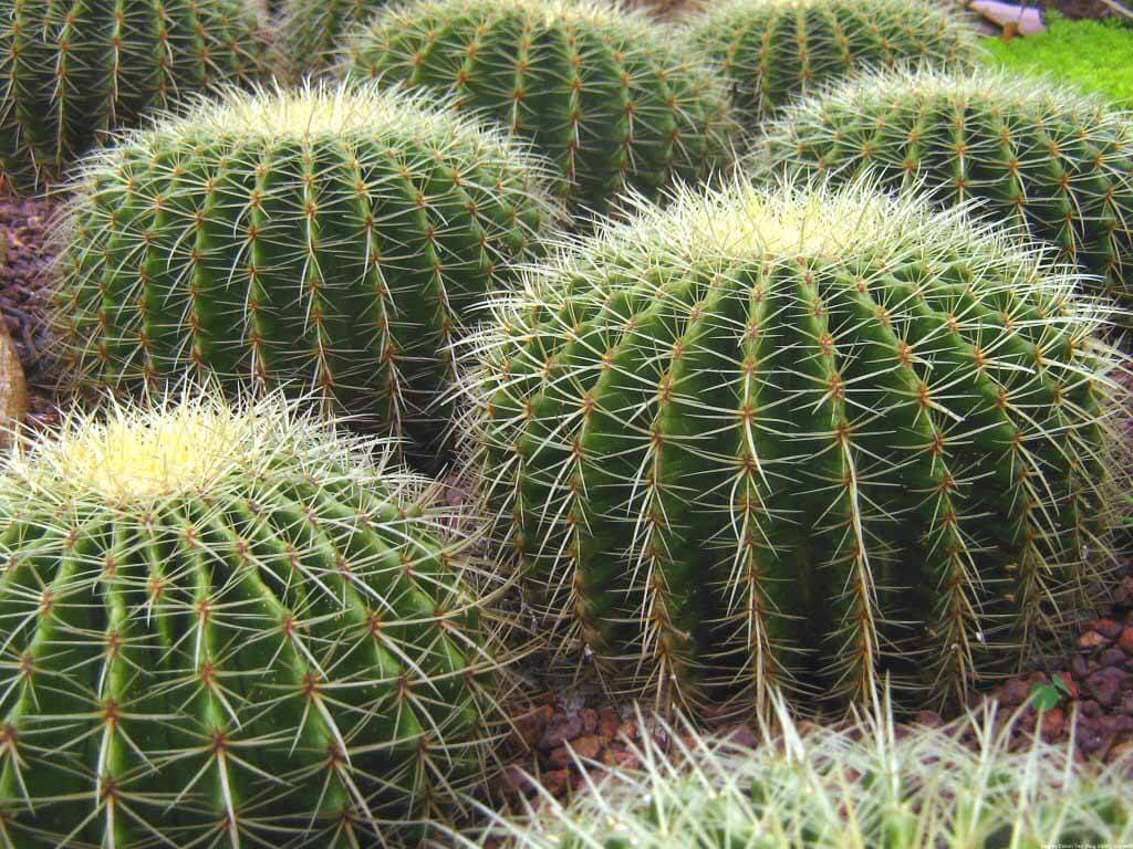 Cactus Desert Type Guide Our House Plants