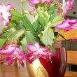 Christmas Cactus in the middle of of a table