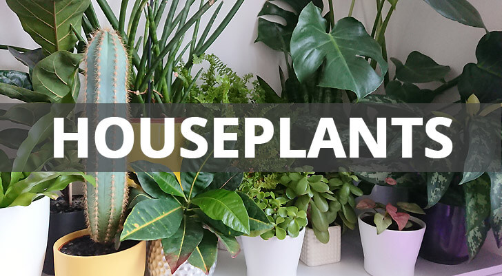 Collection of houseplant books
