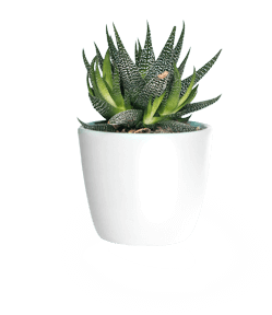 A small houseplant in a pot