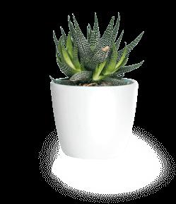 Zz Plant Zamioculcas Zamiifolia Guide Our House Plants