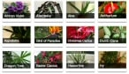 Our Plant Hub Page - containing lots of indoor plant profiles